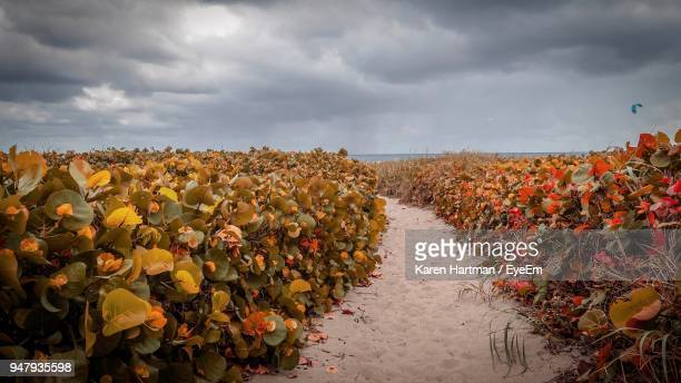 plants growing on field against sky - delray beach stock photos and pictures