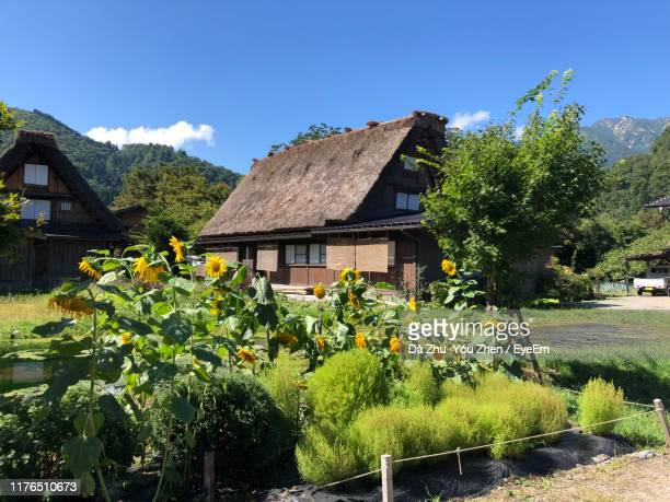 plants growing on field by building against sky - 愛知県 ストックフォトと画像
