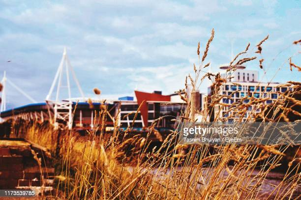 plants growing on field by buildings against sky - cardiff stock pictures, royalty-free photos & images