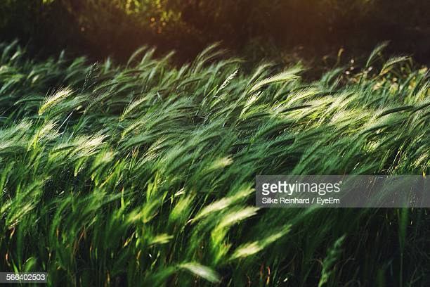plants growing on field in forest - wind stock pictures, royalty-free photos & images