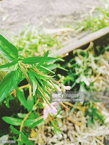 plants growing on field - llanelli stock pictures, royalty-free photos & images
