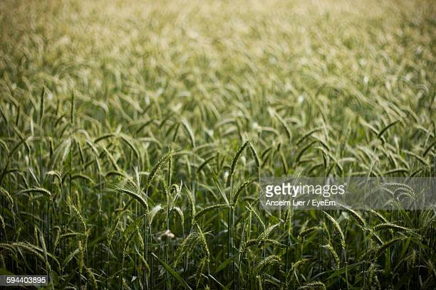 Plants Growing On Field