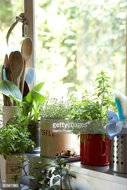 plants growing on kitchen window ledge - ledge stock pictures, royalty-free photos & images