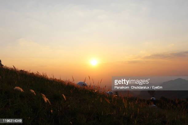 plants growing on land against sky during sunset - panaikorn chutidaralux stock photos and pictures