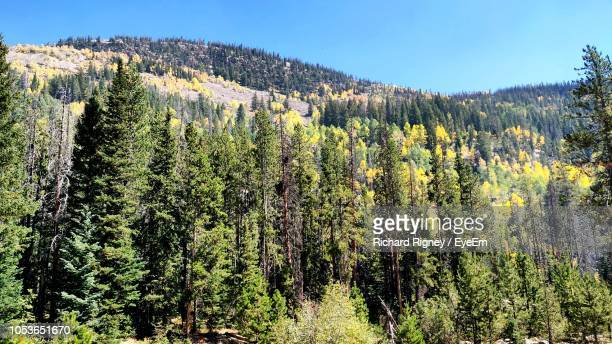 plants growing on land against sky - pinaceae stock pictures, royalty-free photos & images