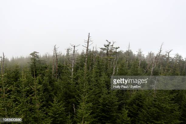 plants growing on land against sky - clingman's dome stock photos and pictures