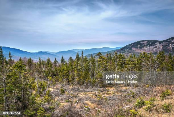 plants growing on land against sky - kenin stock pictures, royalty-free photos & images