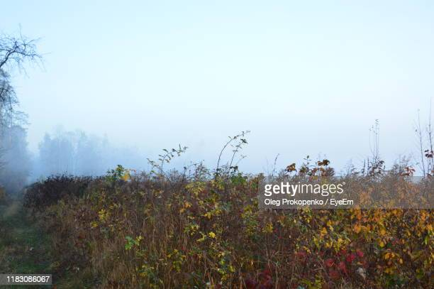 plants growing on land against sky - oleg prokopenko stock pictures, royalty-free photos & images