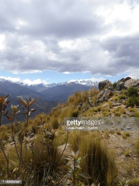 plants growing on land against sky - linda fraikin stock pictures, royalty-free photos & images