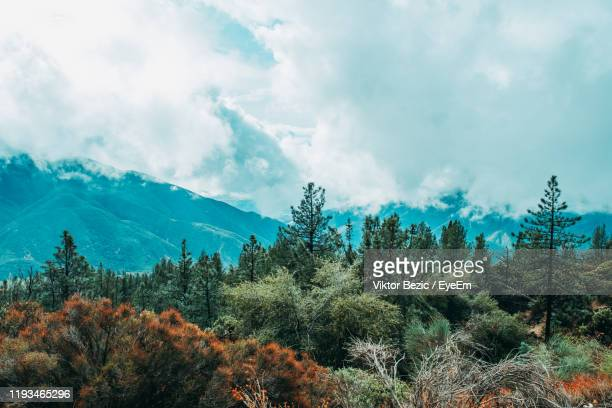 plants growing on land against sky - big bear lake stock pictures, royalty-free photos & images
