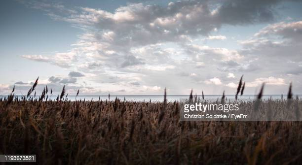 plants growing on land against sky - christian soldatke stock pictures, royalty-free photos & images