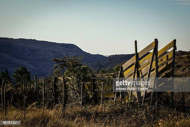plants growing on landscape against clear sky - andres ruffo stock pictures, royalty-free photos & images