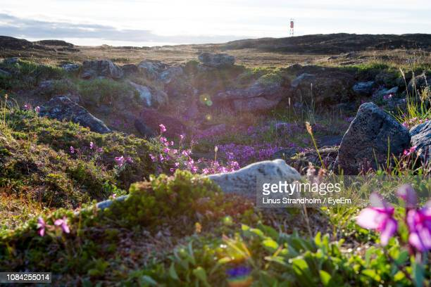 plants growing on landscape against sky - nunavut stock pictures, royalty-free photos & images