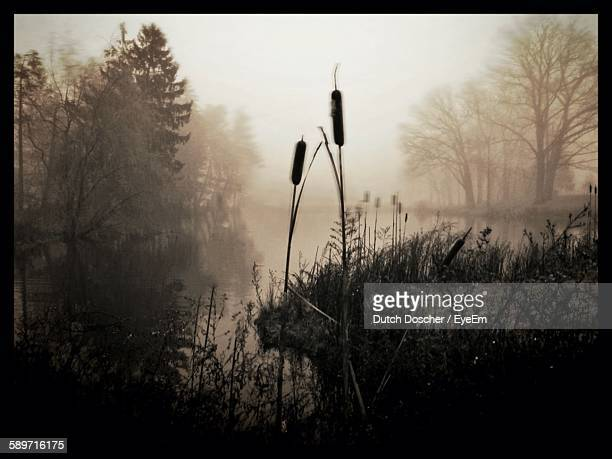 Plants Growing On Riverbank In Forest During Foggy Weather