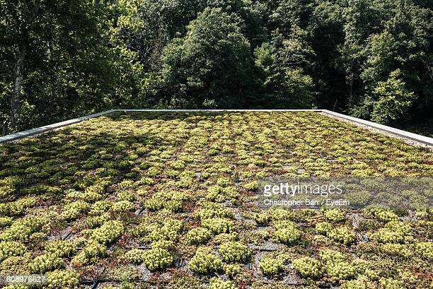Plants Growing On Roof Against Trees