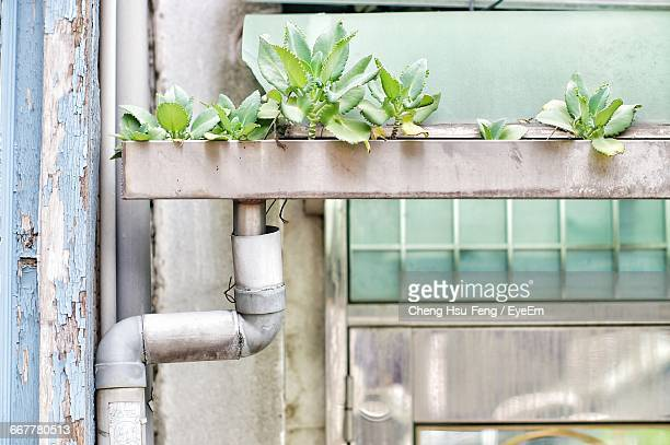 Plants Growing On Roof Gutter