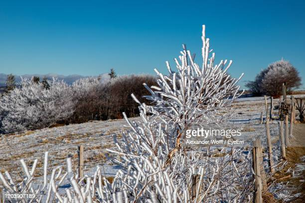 plants growing on snow covered field against sky - lorraine smothers stock pictures, royalty-free photos & images