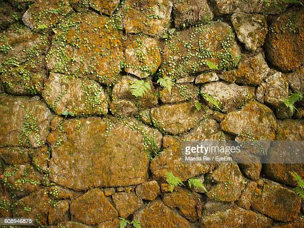 plants growing on stone wall in japanese garden - stone wall stock pictures, royalty-free photos & images