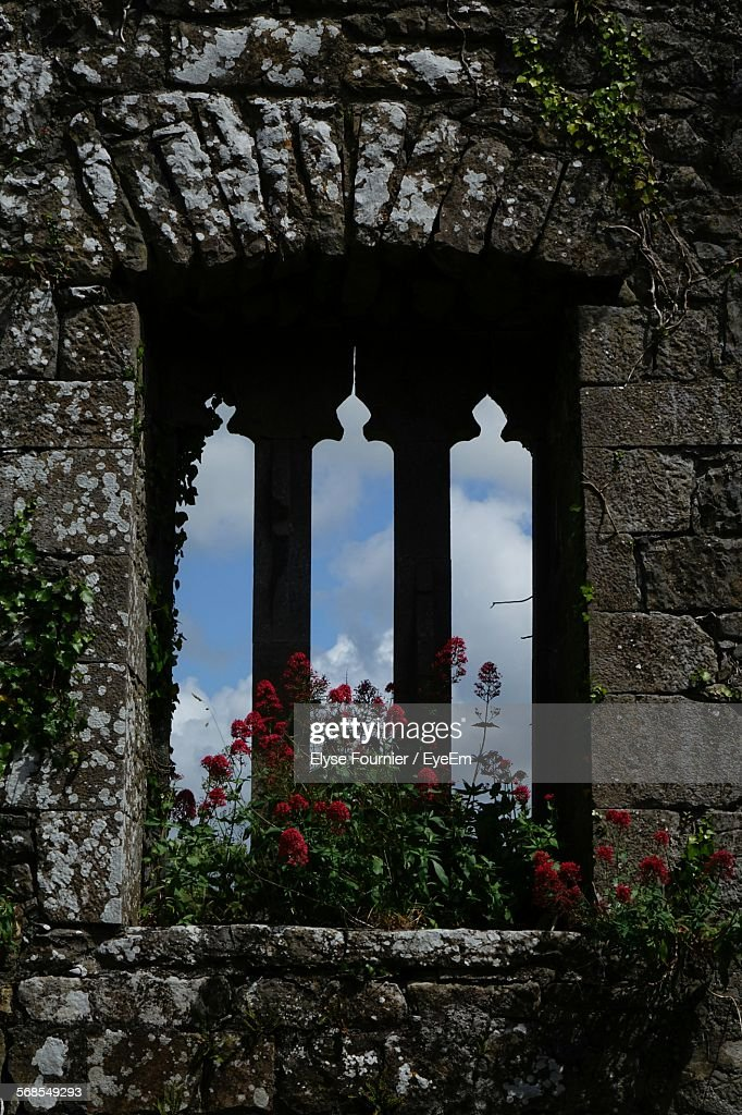 Plants Growing On Window Of Historic Building : Stock Photo