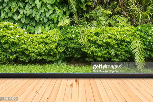 plants growing on wooden floor - patio stock pictures, royalty-free photos & images