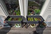 plants growing outside inside windows an