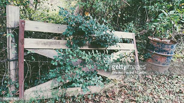 plants growing through abandoned gate - pavard stock pictures, royalty-free photos & images