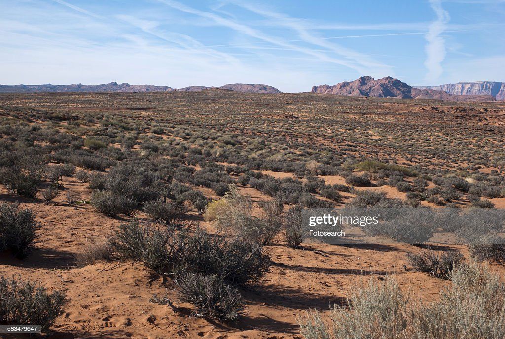 Plants in a desert : Stock Photo