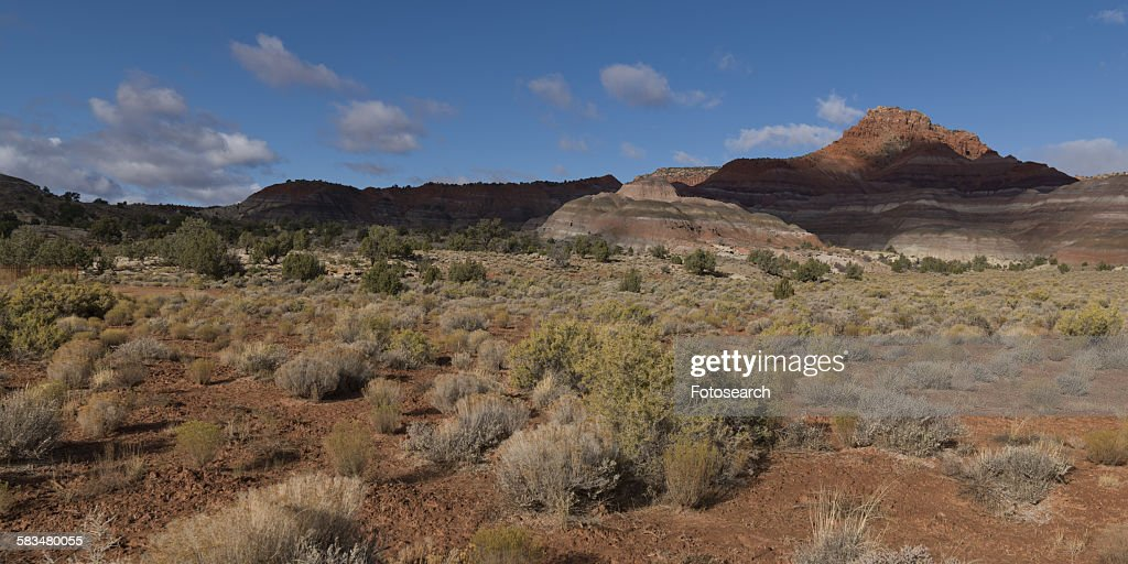 Plants in a desert : Stock Photo