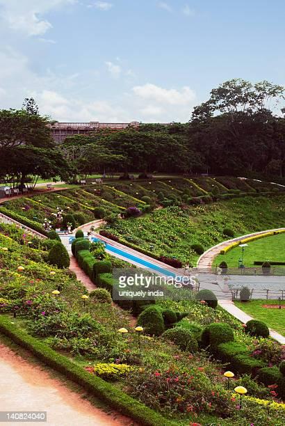 plants in a garden, brindavan gardens, mysore, karnataka, india - mysore - fotografias e filmes do acervo