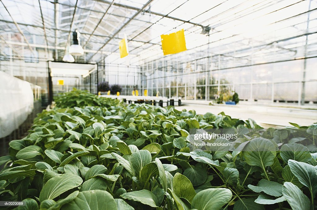 Plants in a Greenhouse : Stock Photo