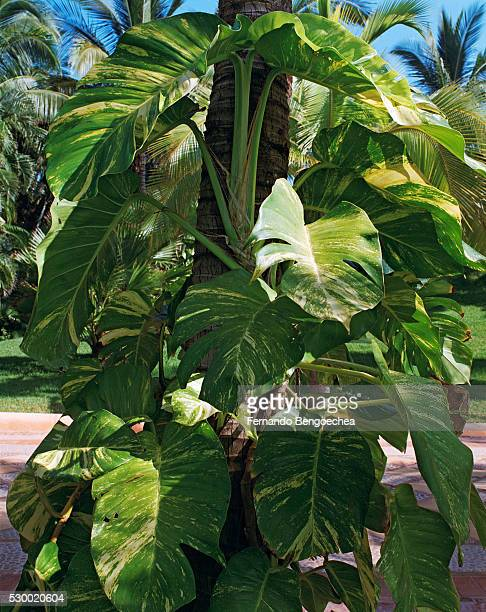 plants in area of costa careyes - fernando bengoechea stock pictures, royalty-free photos & images