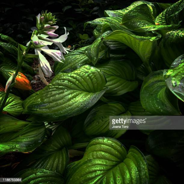 plants in central park -conceptual nature - joana toro stock pictures, royalty-free photos & images