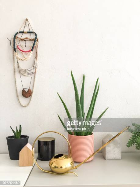 plants in cute pots and watering can are standing on the table - aloe vera plant stock pictures, royalty-free photos & images