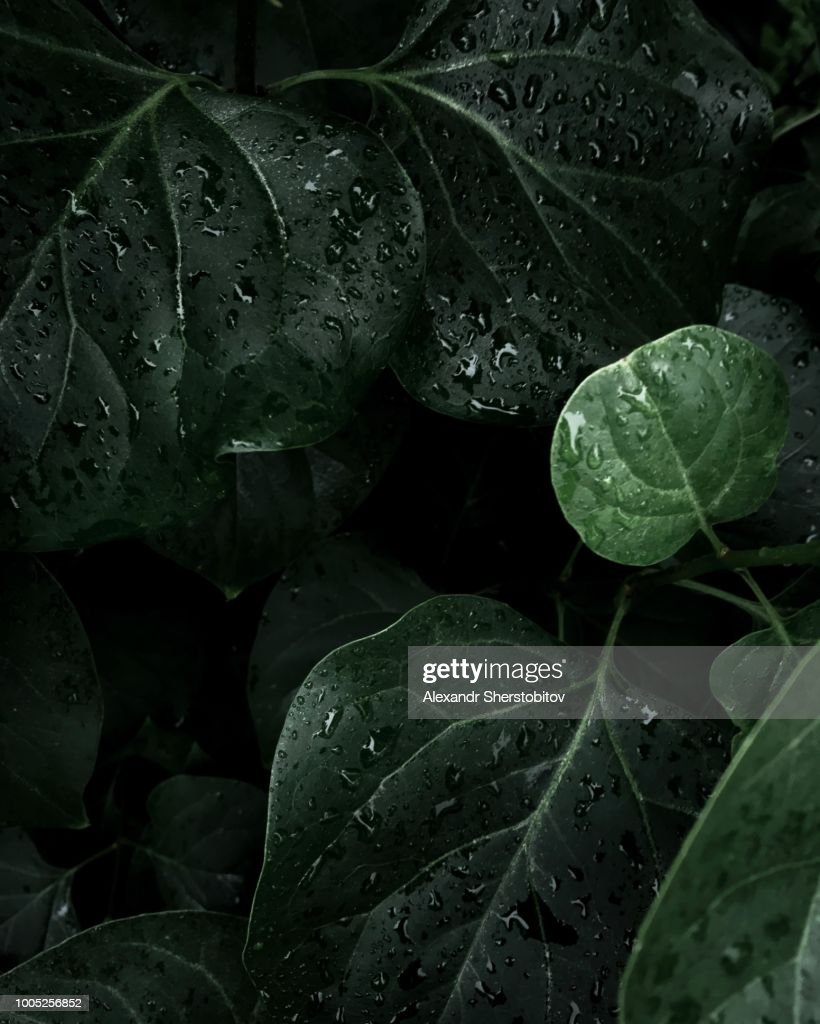 Plants in forest : Stock Photo