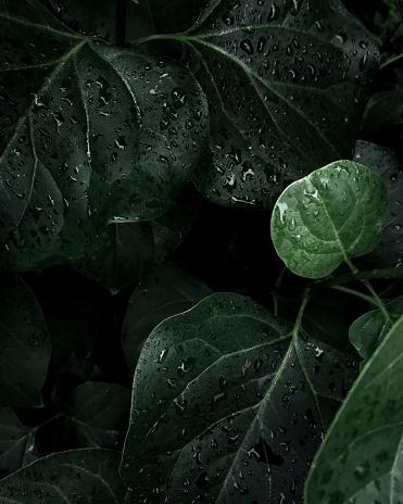 Plants in forest - gettyimageskorea
