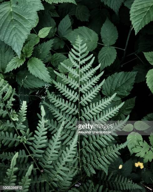Plants in forest