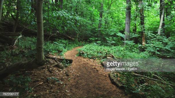 plants in forest - tarrytown stock photos and pictures