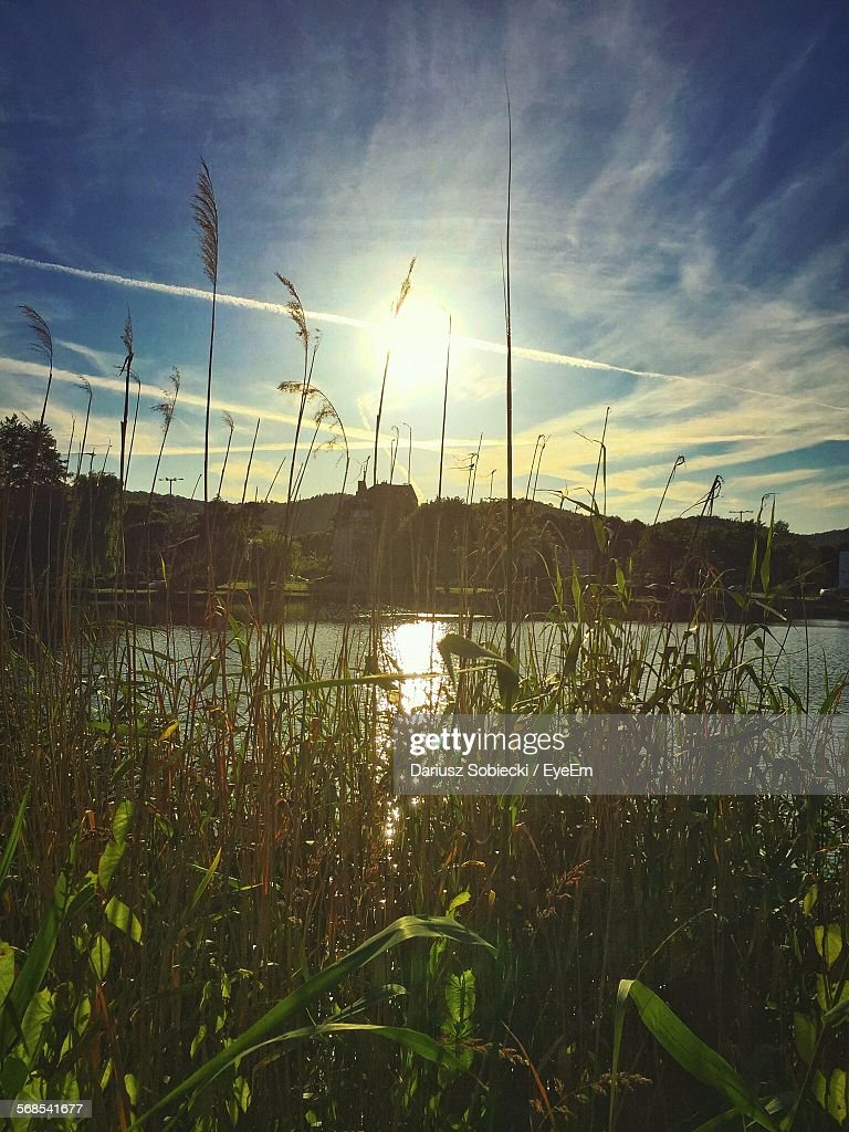 Plants In Front Of Lake Against Cloudy Sky On Sunny Day : Stock Photo