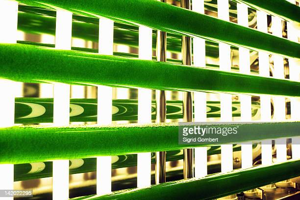 plants in glass tube under lamps - sigrid gombert stock pictures, royalty-free photos & images