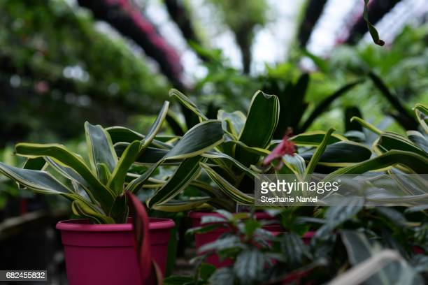 plants in greenhouse - fleur flore stock pictures, royalty-free photos & images
