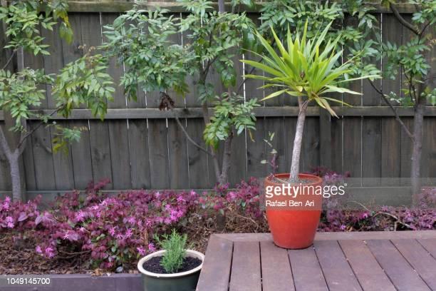 Plants in Home Garden