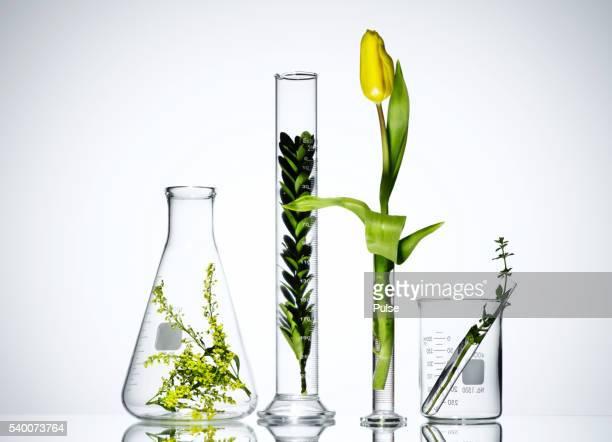 Plants in laboratory glassware