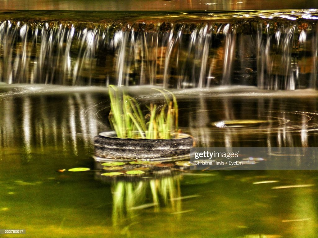 Plants In River At Forest : Stock Photo