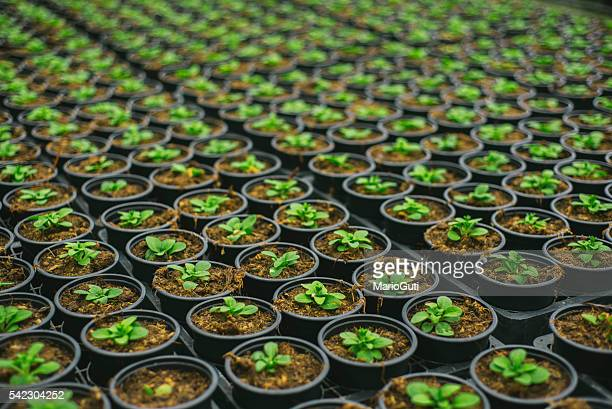 plants in rows - botany stock pictures, royalty-free photos & images