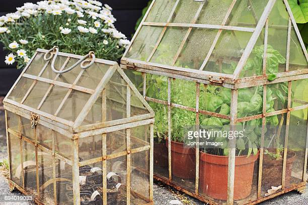 Plants in small greenhouses