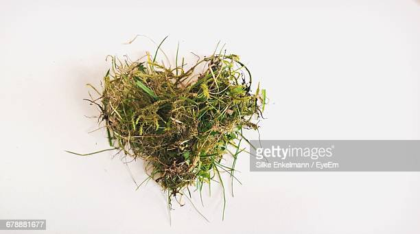 plants in the shape of a heart against white background - thorn stock pictures, royalty-free photos & images