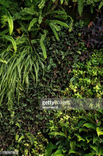 plants, including ferns and spider plants, on a living wall on a building - composizione verticale foto e immagini stock