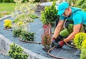 Plants Irrigation System