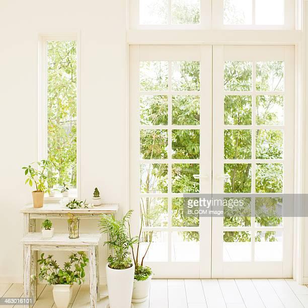 Plants Kept Near The Door Way