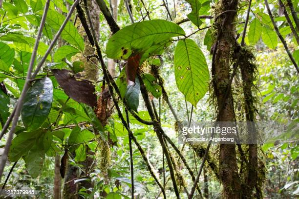 plants, leaves, branches in borneo tropical rainforest, malaysia - argenberg stock pictures, royalty-free photos & images